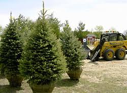 Christmas Tree Farm Lincoln Nebraska by Landscape Trees Pricing And Availability
