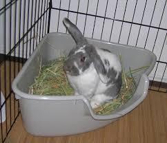rabbit care information chadwell animal hospital