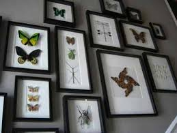 Framed Collection Of Real Butterflies On A Stair Case Wall