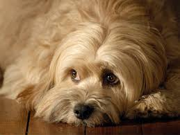 dog grooming courses groom your dog at home small breed dogs that
