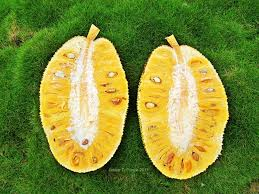 Types Of Pumpkins Grown In Uganda by Tropical Fruit Facts U0026 Legends Jackfruit U2013 The World U0027s Largest