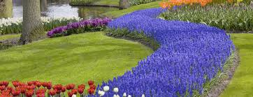 garden design garden design with growing tulip bulbs how to