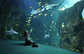 aquarium la rochelle la rochelle tourisme hotel la rochelle