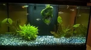 quels poissons pour un aquarium de 60l