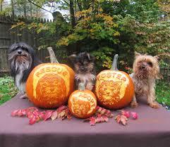 Preserve Carved Pumpkin Forever by Please Adopt A Dog Pumpkin