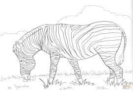 Click The Zebra Eats Grass Coloring Pages