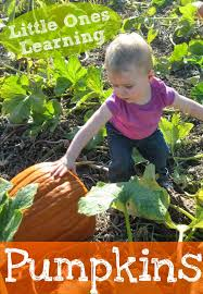 Books About Pumpkins For Toddlers by With A Faithful Heart Little Ones Learning Pumpkins