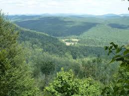 Allegheny Trail Near Gaudineer Knob Hammock Forums Gallery