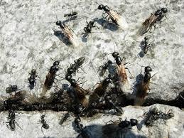das große krabbeln ameisen im haus
