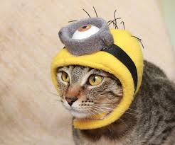 costume for cat 20 diy able costumes for cats cuteness