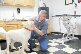arnett animal hospital new vet office caters to lower middle income families lifestyles