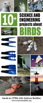 32 Best Bird Unit Images On Pinterest | Nature Study, Art N Craft ... Introduced Birds Birds In Backyards Best 25 Bird Watching Ideas On Pinterest Pretty Backyard 510 Best Birds Of A Feather Images Blackwinged Stilt 2016 Results Aussie Count Rainbow Lorikeet Evolve Their Behavior Without Chaing Bodies The To Feed Or Not To Audubon Female Blackbird Front Yard And Landscaping Ideas Designs Country Garden Striped Honeyeater Inland E Australia My