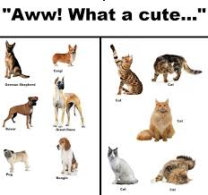 forest cat vs maine coon cats vs dogs