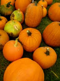 Circleville Pumpkin Festival by Greenspotgirl A Sustainable Lifestyle