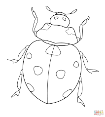 Ladybug Coloring Page Pages Free Picture