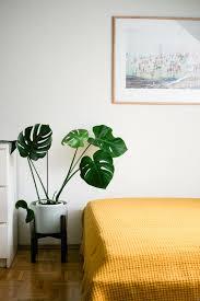 plante verte dans une chambre à coucher s entourer de belles plantes le monstera frenchy fancy