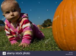 Pumpkin Patch San Jose California by Baby In Pumpkin Patch 10 Months Old Crawling Toward Camera Past