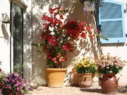 bougainvillier de la haute couture pour tous les jardins