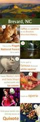 Patterson Pumpkin Patch Nc by 9 Best North Carolina Mountains Dogs Images On Pinterest