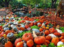 Maxwells Pumpkin Patch Amarillo Texas by 10 Great Pumpkin Patches In Texas