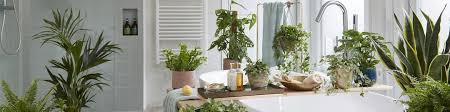badezimmerpflanzen bakker