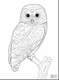 Excellent Owl Coloring Page With Full Pages And Christmas
