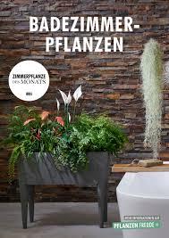 badezimmerpflanzen zimmerpflanzen des monats mai blumenbüro