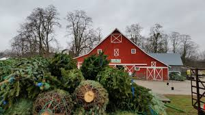 Christmas Tree Growers Battle Against Popularity Of Plastic (1 ... Red Barn In Arkansas Red Hot Passion Pinterest Barns New Mexico Medical Cannabis Sales Up 56 Percent Patients 74 Barnhouse Country Stock Photo 50800921 Shutterstock Rowleys Barn Home Of Spoon Interactive Childrens Dicated On Opening Day Latest Img_20170302_162810 Growers Redbarn Wet Cat Food Two Go Tiki Touring Black Market The Original Choppers By Redbarn 100 Natural Baked Beef Chews For Dogs Meet The Team Checking Out Santaquin Utah Bully Stick