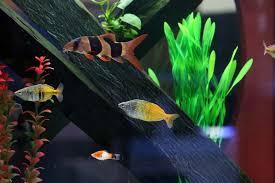 aquarium geant a visiter belgique aquarium à quaregnon arowana aquarium concept poissons étangs