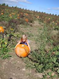Visalia Mooney Pumpkin Patch by 100 Pumpkin Patch Visalia Ca Hours Vossler Farms Corn Maze