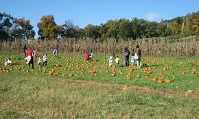 Pumpkin Picking Nj by Pumpkin Picking Fun At Wightman U0027s Farm Little Footprints