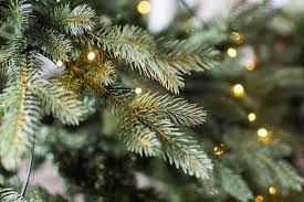 Balsam Christmas Tree Australia by Where To Buy A Real Christmas Tree In Nyc