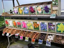 garden ideas tulips and daffodils early flowering bulbs planting