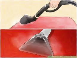 Fleas Hardwood Floors Borax by 4 Easy Ways To Get Rid Of Fleas In Carpets Wikihow