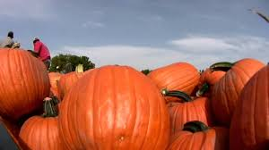 Pumpkin Patch Near Tulsa Ok by Groupon 18 For Visit For Four To Corn Maze And Pumpkin Patch At