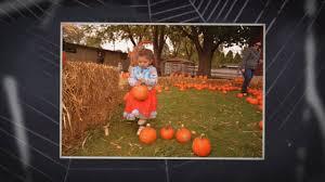 Bengtson Pumpkin Farm Chicago by Blackberry Farm Pumpkin Weekends Youtube