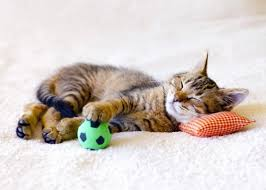 die wohnung katzengerecht gestalten heimhelden