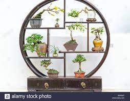 miniaturen bonsai pots in der dekorativen runden holzrahmen