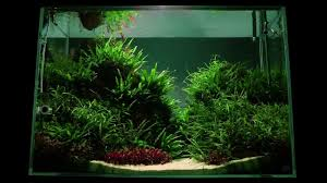 Altitude Aquascape By James Findley - The Making Of - YouTube Photo Planted Axolotl Aquascape Tank Caudataorg Suitable Plants Aqua Rebell Tutorial Natures Chaos By James Findley The Making Aquascaping Aquarium Ideas From Aquatics Live 2012 Part 4 Youtube October 2010 Of The Month Ikebana Aquascaping World Public Search Preserveio Need Some Advice On My Planned Aquascape Forum 100 Cave Aquariums And Photography Setup Seriesroot A Tree Animalia Kingdom Show My Our Lovely 28l Continuity Video Gallery Green 90p Iwagumi Rock Garden Page 8