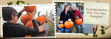 Piedmont Service Center Pumpkin Patch by Walter U0027s Pumpkin Patch Corn Maze And Family Farm In El Dorado