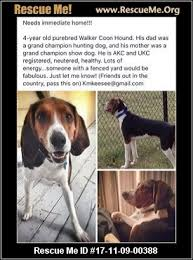 Do Treeing Walker Coonhounds Shed by Georgia Treeing Walker Coonhound Rescue U2015 Adoptions U2015 Rescueme Org