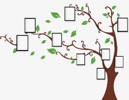 l arbre a cadre arbre de cadre photo le tronc de l arbre cadre photo cadre