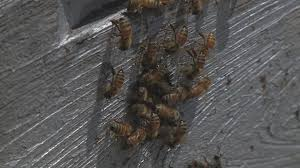 Northwest Ohio Pumpkin Patches by Local Beekeeper Loses Half His Hives