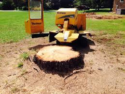 tree stump removal methods u0026 tips homeadvisor