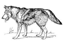 Free Wolf Coloring Pages 20 Printable For Kids