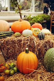 Kenova Pumpkin House 2012 by 195 Best Fall Images On Pinterest Seasonal Decor Fall And Fall