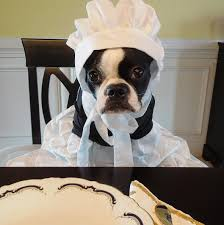 Pets As Pilgrims Photos | PEOPLE.com The 25 Best Pottery Barn Discount Ideas On Pinterest Register Best Kids Shark Costume Cool Face Diy Snoopy Costume Barn Toddler Bear Baby Lion Halloween Puppy Style Mr And Mrs Powell Mandy Odle Nursery Clothing Shoes Accsories Costumes Reactment Theater Unique Dino Dinosaur Mat Busy Philipps Joanna Garcia Swisher Celebrate Monique Lhuillier
