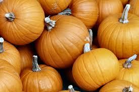 Storing Pumpkin Pieces by Preferring Pumpkins Humane Living