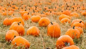 Best Pumpkin Farms In Maryland by Best Pumpkin Patches In Washington D C Cbs Dc