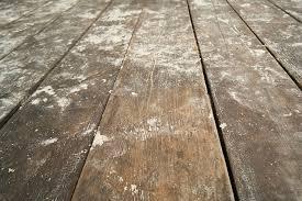 Squeaky Wood Floor Screws by How I Repair Squeaky Wood Floors Share My Space